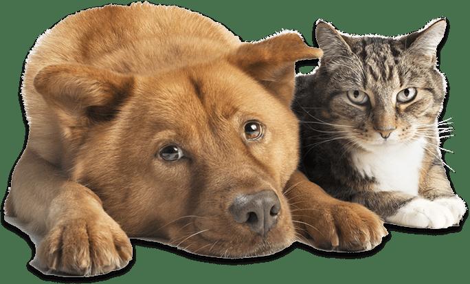 DogCat2