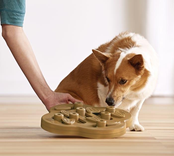 nina ottosson dog hide n slide dog game