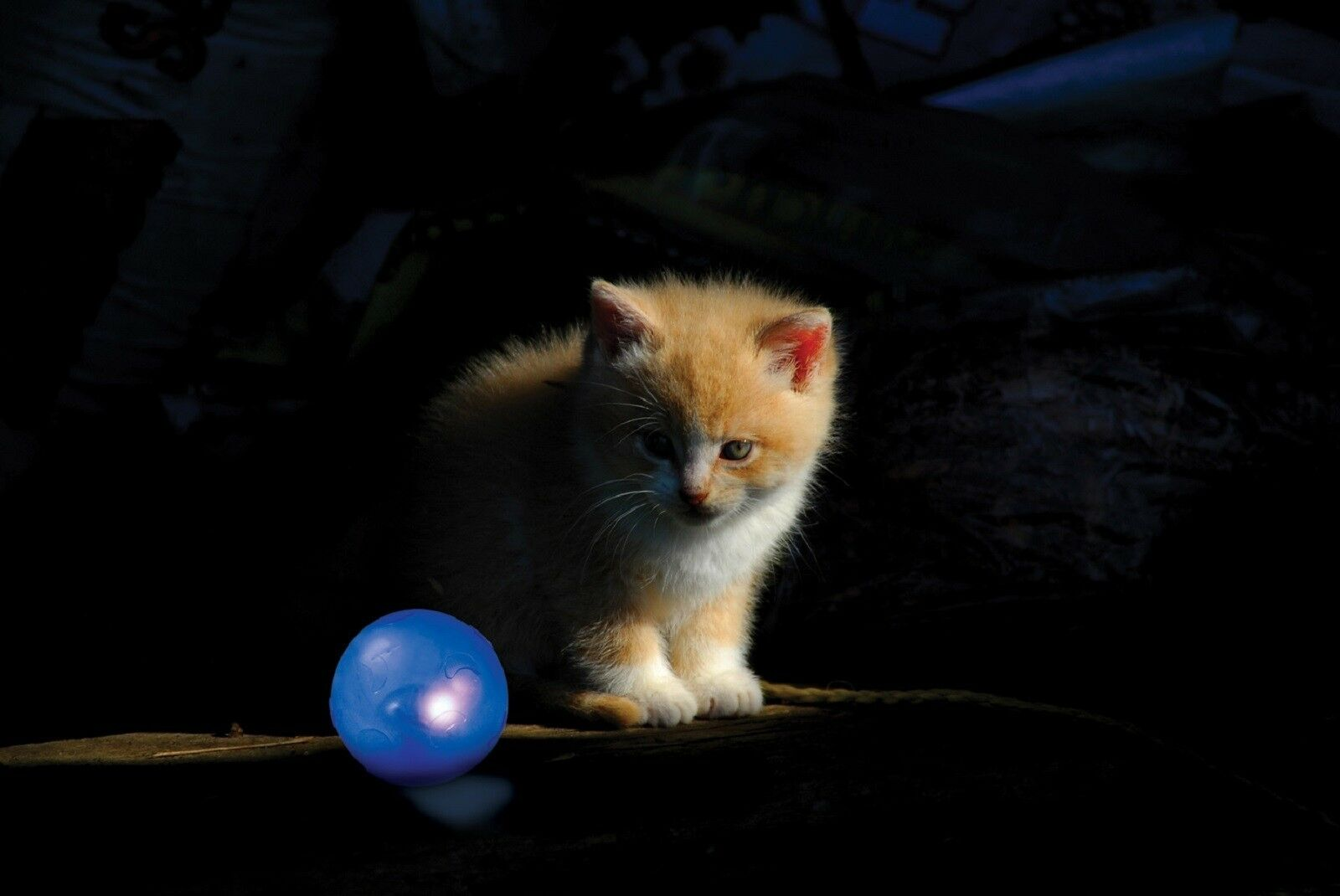 Petstages Nighttime Twinkle Ball Cat Toy 1