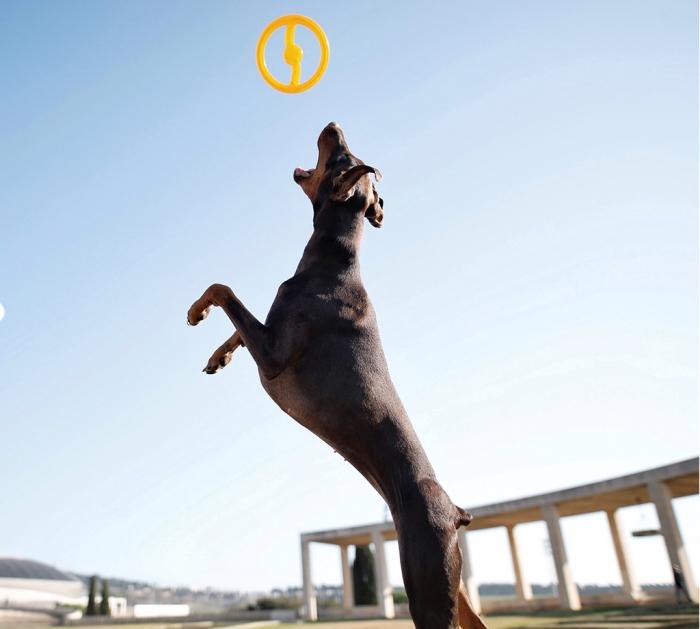 bionic 2 in 1 toss n tug ring durable dog toy צלחת מעופפת לכלב